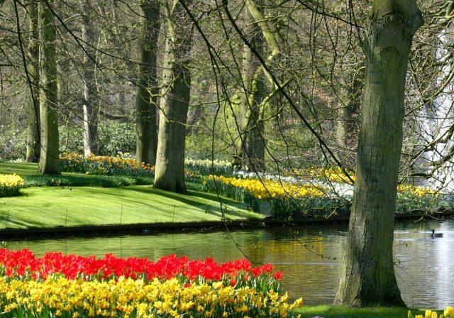 spring offer image 1
